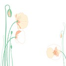 Illustration of corn poppy (thumbnail)
