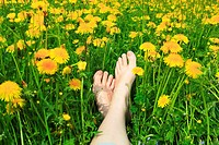 feet in field of dandelions, Switzerland