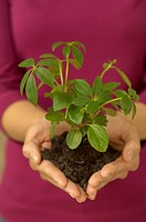 Woman holding seedling