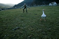 Mature man trying to catch a goose