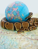Closeup of a ball python coiled around a globe