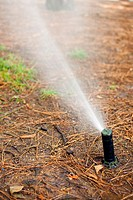 sprinkler irrigating