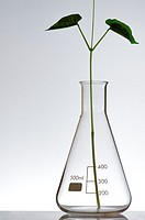 plant growing in a laboratory flask with a white background