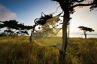 Fishing net drying on trees