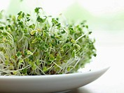 Fresh bean sprouts