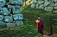 Monk at the ruins of a fort, Sigiriya, Matale District, Sri Lanka