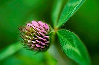 Close_up of a wildflower
