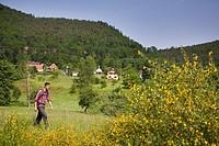 Hiker passing Wengelsbach valley, Wengelsbach, Niedersteinbach, Alsace, France