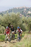 Mountain bikers on a track at Monte Colognola, Lago Trasimeno, Umbria, Italy, Europe