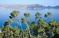 Pine trees at Pollen&#231;a Bay, Majorca, Spain