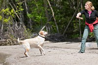 Woman throwing stick for her dog on a beach, Yellow Labrador Retriever male. Lake Winnipeg, Hecla Island Provincial Park, Manitoba, Canada.