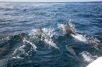 Delfin_Sichtung
