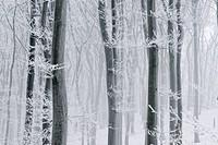 Europa, Austria, Wien, Wienerwald, verschneiter Wald mit Eiskristallen