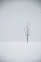 March in Maine. A small tree stands alone in a snowy field.