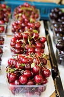 Freshly picked cherries at an open air market