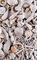 A collection of Shells and Coral.