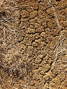 Dried mud and grass in Colorado