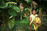 banana´s in Colombia