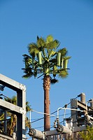Cell Phone tower disguised as a Palm tree to blend in.