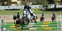 Horse jumping competition at the Royal Adelaide Show.