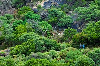 A couple emerge on a cliff face whilst hiking in a Melalueca thicket.