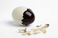 Thousand years duck egg with partial peeled egg-shell