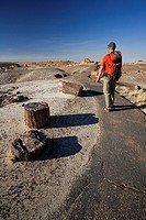 Hiker in Petrified forest national park
