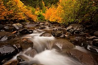 Stream in autumn Gifford Pinchot National Forest