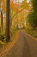 Autumn, Motor Nature Trail, Great Smoky Mountains National Park
