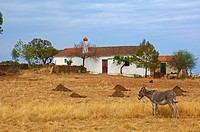 Monsaraz  Farm  Alentejo  Portugal, Europe.