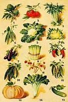 Assorted vegetables  Antique illustration  1900
