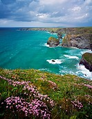Spring flowers on the Carnewas cliff top overlooking Bedruthan Steps on the North Cornwall Coastline near Newquay, Cornwall, England, United Kingdom