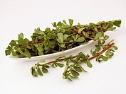 Purslane leaves