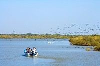 Senegal _ Saint_Louis region _ National park of Djoudj