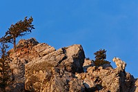 Mountain Goats are at home in the cliffs.
