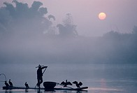 A fisher uses Cormorants to capture fish from the Li River at sunrise.