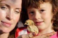 Woman and girl with little chicken in hands