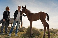 tarifa, cadiz, andalusia, spain, a girl pets a foal while standing with her mother