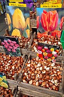 TULIP BULBS, FLOWER MARKET, BLOEMENMARKT