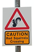 Squirrel road sign, Ellon, Aberdeenshire, Scotland. Squirrel road sign warning motorists of red squirrels Sciurus vulgaris, which are an endangered sp...