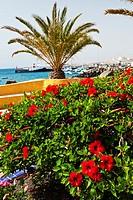 Paseo Marítimo  Puerto del Rosario  Fuerteventura, Las Palmas, Canary Islands, Spain.