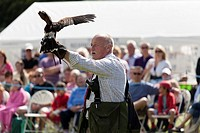 demonstration of falconry at village show