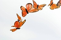 Artificial butterflies flying