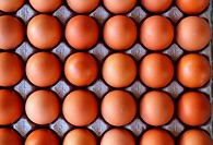 hen eggs rows pattern box food background