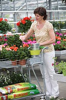 Woman choosing a geranium in a greenhouse