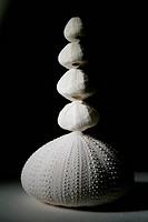 Still_life of white shells, studio shot.
