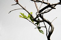Still_life of tree branches, studio shot.
