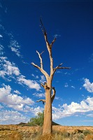 Australian desert ...
