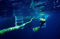 One scuba diver holding a rope ready to climb onto a boat ladder.
