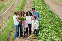 People looking at vegetable crop on farm